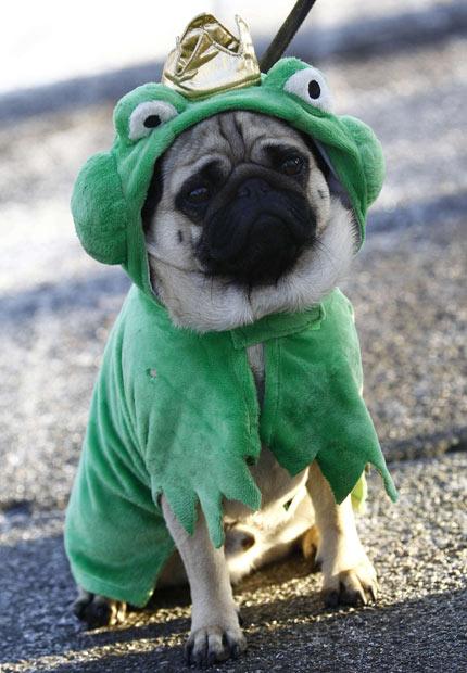 carnival-dog_2144073i