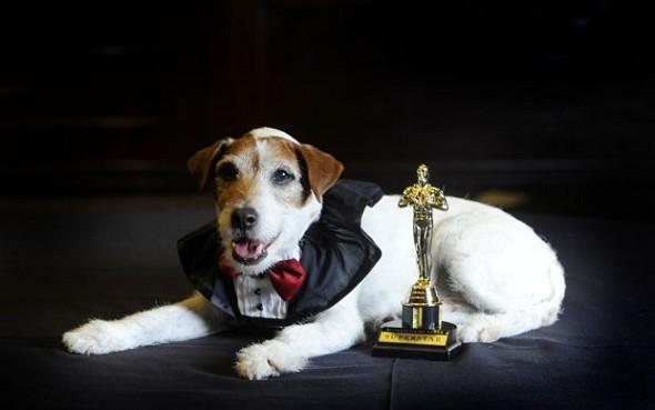 Até o catiorro do filme O Artista tem Oscar e Di Caprio não!!111@!